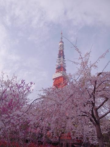 東京タワー、前景に桜