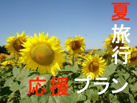 summer-special-plan