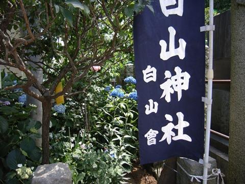 白山神社、文京あじさいまつり2