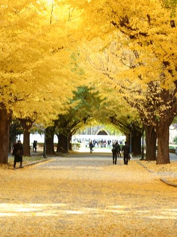 東京大学、正門より安田講堂