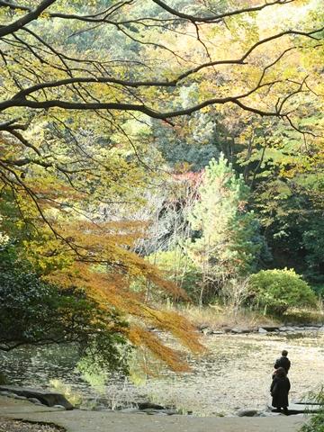 三四郎池の秋