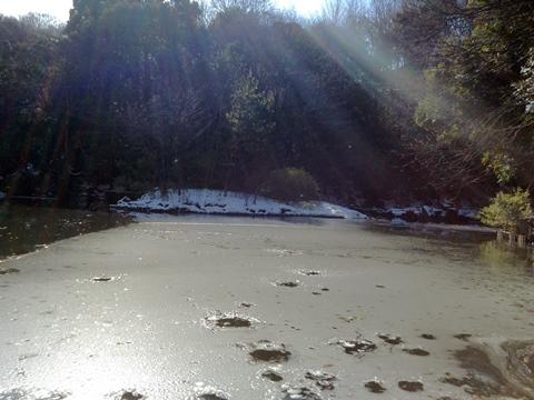 三四郎池、凍る