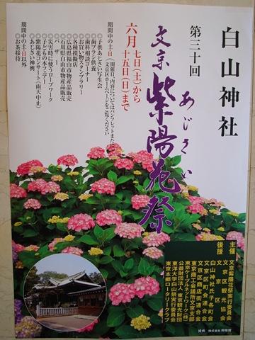 白山神社、あじさいまつりポスター
